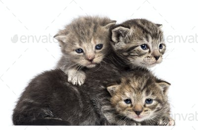 Kittens lying on each other against white background