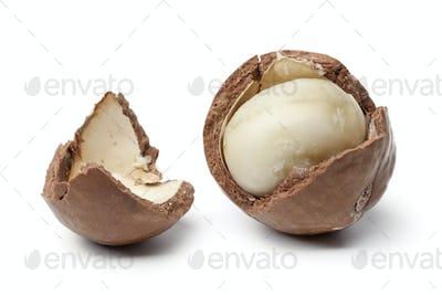 Macadamia nut in a broken shell