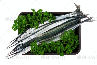 Fresh fish garfish (Belone belone) in leaves of parsley