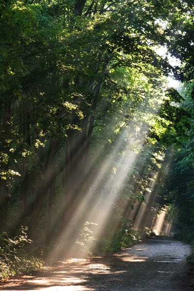 sun fog in forest