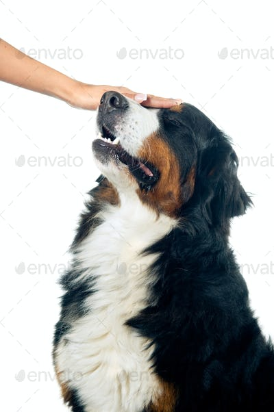 Petting the dog