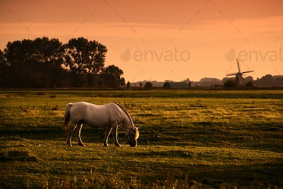 white horse on pasture at sunrise