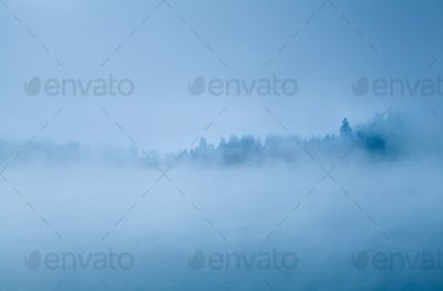 forest in morning fog