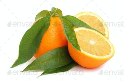 Orange citrus