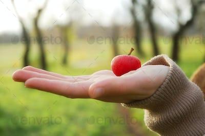 Hand holding an apple