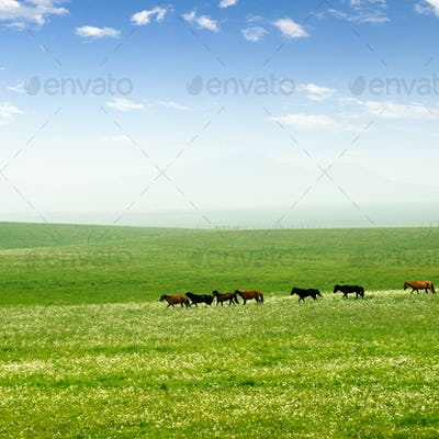 Horse on the grassland