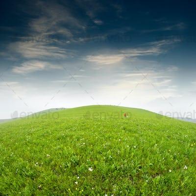 Summer grass field