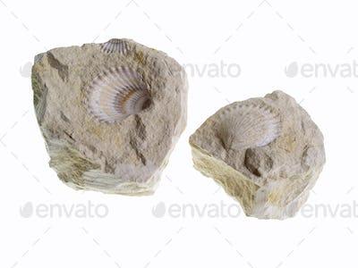 Fossil, Poland
