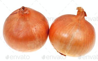 two onion bulbs