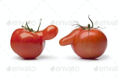 Nosy tomatoes