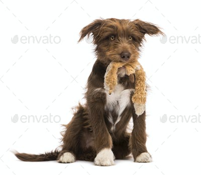 Crossbreed, 5 months old, sitting and holding a stuffed toy against white background