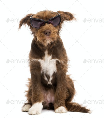 Crossbreed, 5 months old, sitting and wearing sunglasses, against white background