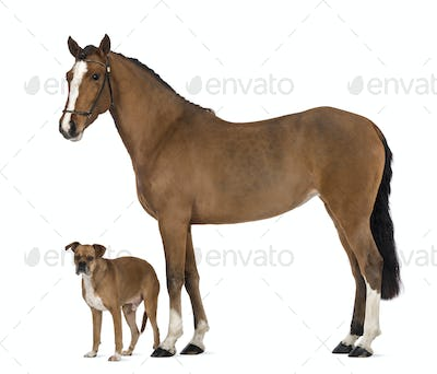 Crossbreed dog standing next to a Female Andalusian, 3 years old