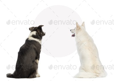 Rear view of two dogs looking at a blank sign, isolated on white