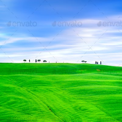 Tuscany, cypress trees and green fields. San Quirico Orcia, Italy.