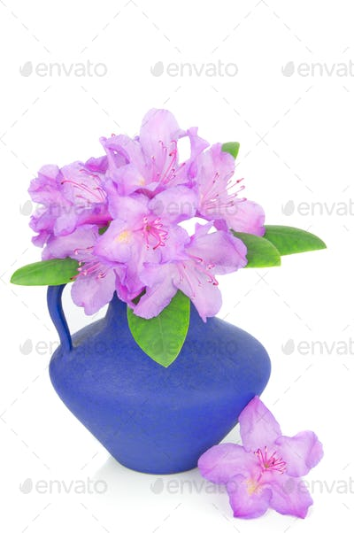 Rhododendron in a Vase