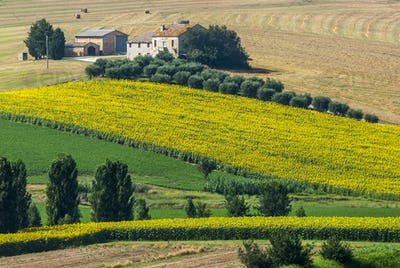 Marches (Italy) - Farm