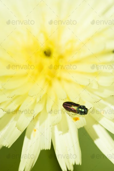 Multicolored insect on yellow flower