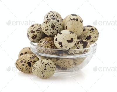 quail egg on white
