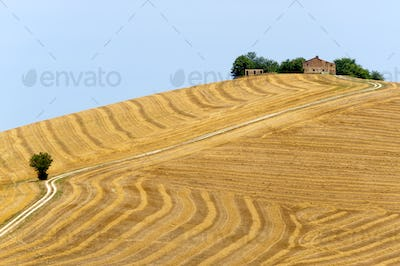 Marches (Italy) - Landscape at summer, farm