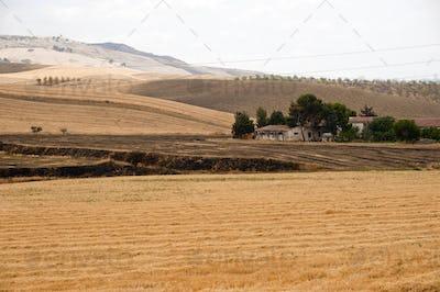 Between Puglia and Basilicata (Italy): Country landscape at summ