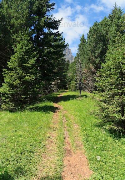 alpine path