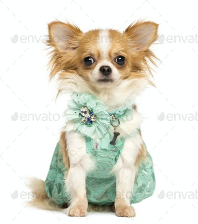 Chihuahua wearing a green dress sitting, looking at the camera, isolated on white