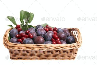 Juicy fruits in the basket.