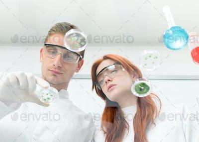 scientists observing petri dish