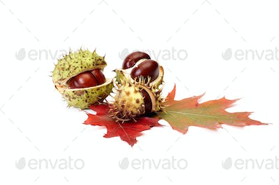 Autumn leaves and chestnuts on a white.