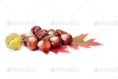 Splendid chestnuts and leaf on a white.