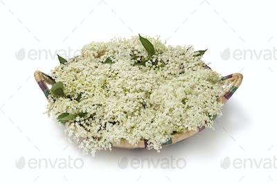 Basket with Elderberry flowers