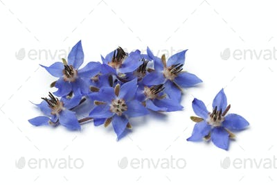 Heap of fresh borage flowers