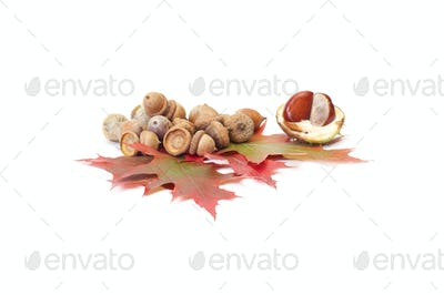 Fun acorns and leaves with chestnuts.