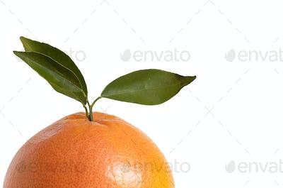 Half of orange on a white.