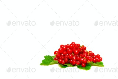 Fresh red currant on a white.