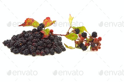 Pile of blackberries.