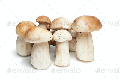 Mushrooms Isolated On The White Background