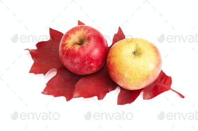Autumnal fruits on a white.