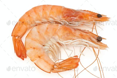 two shrimps