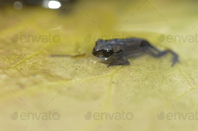 Young Toad