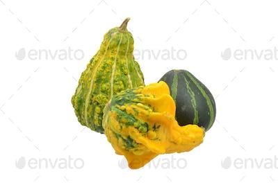 Mini Decorative Pumpkins