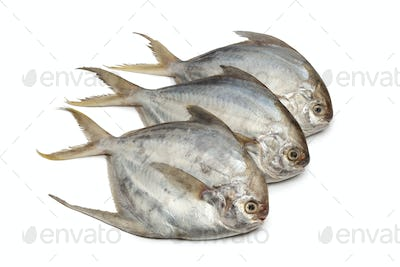 Pomfret fishes