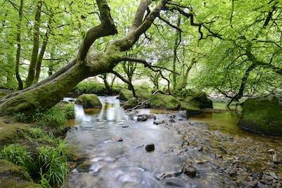 The River Fowey