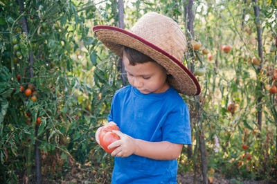 Little boy in organic garden