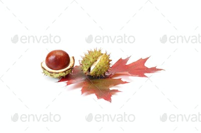 Colorful autumn leaves and chestnuts.