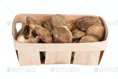 Wooden basket with shiitake mushrooms
