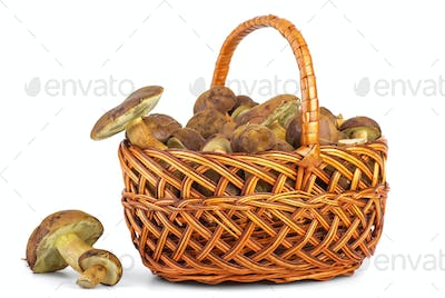 Basket with cepe mushrooms