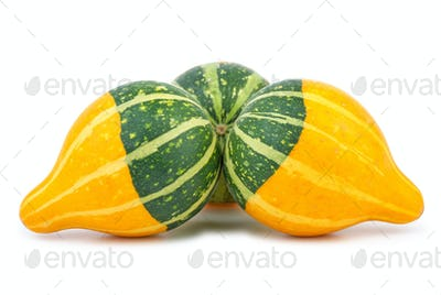 Three yellow-green fancy pumpkins