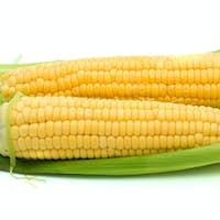 Pair of ripe corn ears